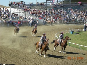 These are some horses at the round-up